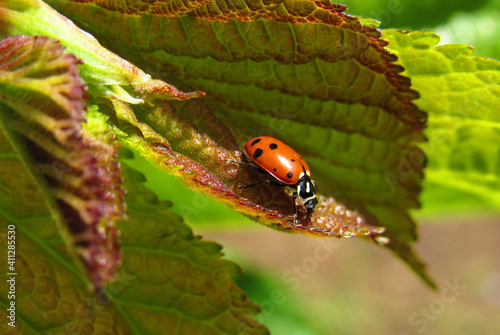 Canvas Print Close-up Of Ladybug On Leaf