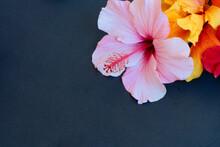 Fresh Hibiscus Flowers