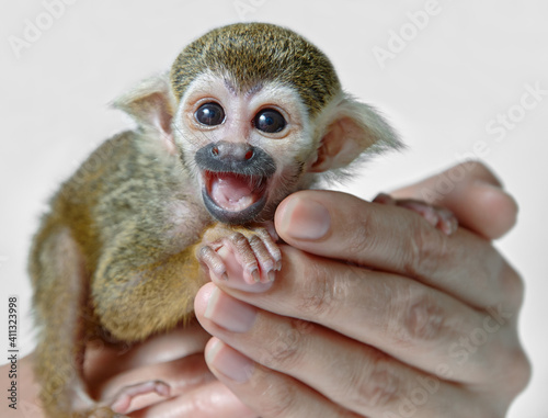 Fotografija Cropped Hand Of Person Holding Monkey Infant Against White Background