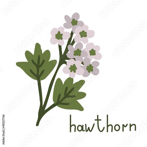 Obraz na plátně Hawthorn vector flower