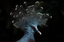 Close Up Of A Bird Of Paradise