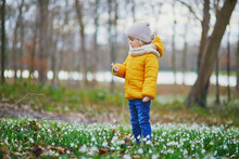 Cute Toddler Girl Standing In The Grass With Many Snowdrop Flowers In Park Or Forest On A Spring Day