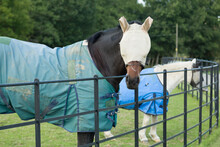 Horses Wearing Fly Mask And Turnout Rug Or Blanket, UK