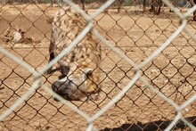 Close Up Of A Hyena