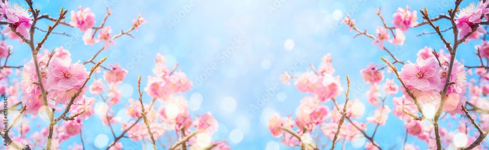Fototapeta Beautiful cherry blossom flowers over blurred background. Spring season concept