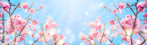Canvas Beautiful cherry blossom flowers over blurred background