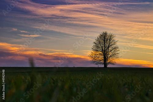 Fototapeta Bare Tree On Field Against Sky During Sunset obraz