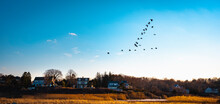 Migrating Geese Flying Over The Seaside Village Over The Marshland