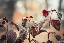 A Lone Plant On A Blurry Background. Light Autumn Background Of Coffee Tinting