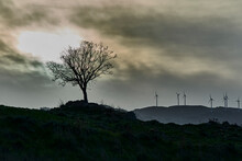 Bare Autumn Tree And Wind Turbines Against The Light On The Horizon Like Figures Of Contemporary Trees