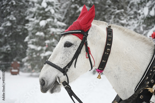 Horse against the background of a winter forest © Alexey Kuznetsov
