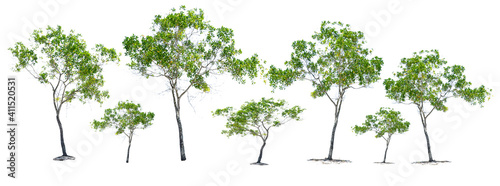 Foto tree isolated on white background