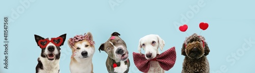 Fényképezés Banner five dogs love celebrating valentine's day with heart shape stickers, bow tie, glasses and diadem
