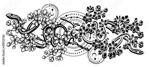 Carta da parati Vector illustration, snake on sakura branch,Handmade, tattoo, white background,