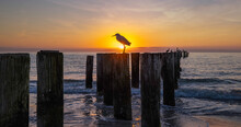 Relaxing Tropical Sunset With Bird Naples