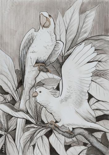 Fototapeta Beżowe papugi obraz