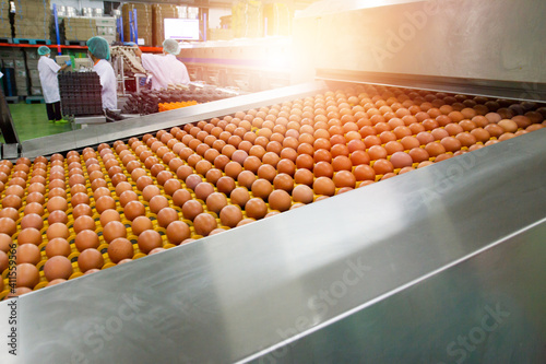 Obraz na plátně Fresh and raw chicken eggs on a conveyor belt, being moved to the packing