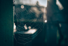 Spider Web And Light Of Sun