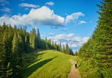 Eco-tourism Rocky Trail Trough Forest