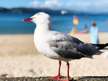 Close-up Of Seagull Perching On At Beach