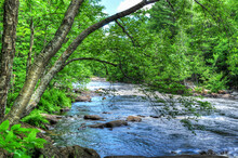 Tree Overhanging A Wide Creek