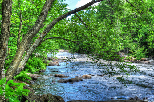 Papel de parede tree overhanging a wide creek