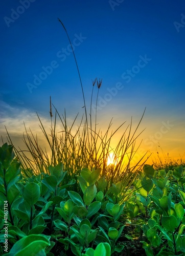 Crops Growing On Field Against Sky During Sunset Poster Mural XXL