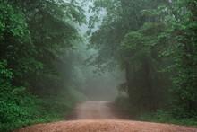 Foggy Dirt Road In Arkansas