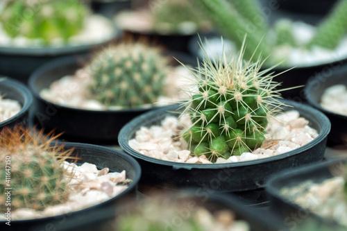 Tableau sur Toile Close-up Of Succulent Plant