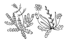 Vector Drawn Isolated Linear Doodle Illustration With Set, Collrction Field Plants, Flowers. Concept Is Botanical.