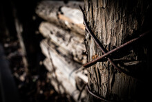 Fence Stakes And Rusted Wires