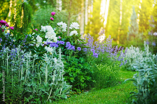 Papel de parede beautiful english style cottage garden view in summer with blooming peonies and companions - stachys, catnip, heranium, iris sibirica
