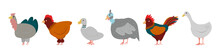 Set Of Farm Birds Isolated On White Background. Bird Farm. Turkey, Chicken, Duck, Guinea Fowl, Rooster And Goose In Cartoon Simple Flat Style. Vector Illustration.
