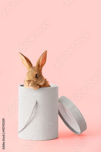 Cute fluffy rabbit in gift box on color background Wallpaper Mural