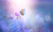 Leinwandbild Motiv Butterfly on clover flower in spring in summer in rays of transparent violet light, soft focus macro. Aerial refined subtle gentle exquisite artistic image beauty of nature.