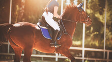 A Fast Strong Bay Racehorse With A Rider In The Saddle Gallops Through The Arena, Illuminated By The Sunlight On A Summer Day. Equestrian Sports. Horse Riding.