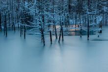 美瑛町 青い池 冬の夜明け