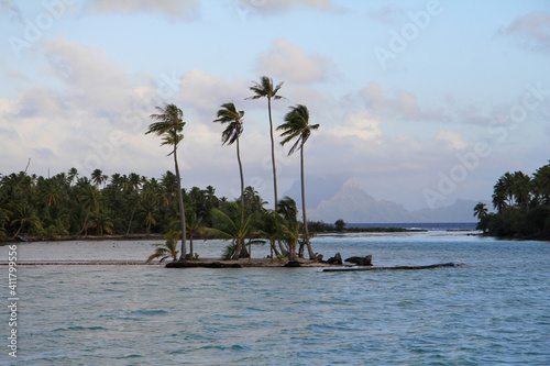 Obraz na plátně Ile tahitienne