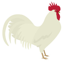 White Leghorn Rooster Breed Of Chickens Vector Illustration Isolated Object
