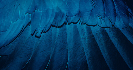 blue feather pigeon macro photo. texture or background