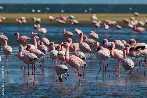 Flamingo colony in Walvis Bay in Namibia Wallpaper Mural