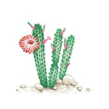 Illustration Hand Drawn Sketch Of Cleistocactus With Red Flower For Garden Decoration.