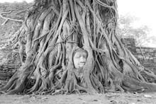 Thailand Tree Buda