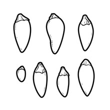 Little Bitter Peppers Linear Drawing On White Background