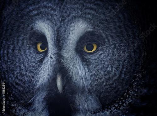 Photo Close-up Portrait Of Owl