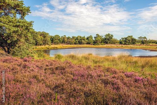 Fotografie, Obraz Small fen in a Dutch nature reserve