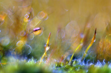 Amazing Colorfull Moss Macro