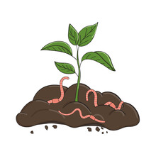 Garden Organic Fertilizer With Worms. Ready Compost Pile With Sprout. Recycling Organic Waste. Sustainable Living Concept
