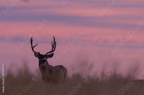 Mule Deer Buck at Sunrise in Autumn in Colorado