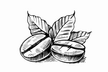 Sketch Of Coffee Beans With Leaves
